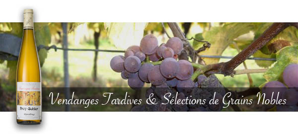 Vendanges_Tardives_et_Selection_de_Grains_Nobles