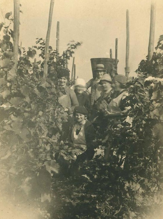 1935-vendanges-alsace-scherwiller